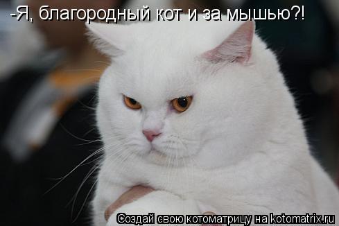 Котоматрица: -Я, благородный кот и за мышью?!