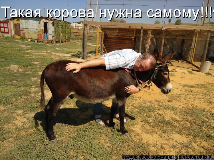 Котоматрица: Такая корова нужна самому!!!^_^