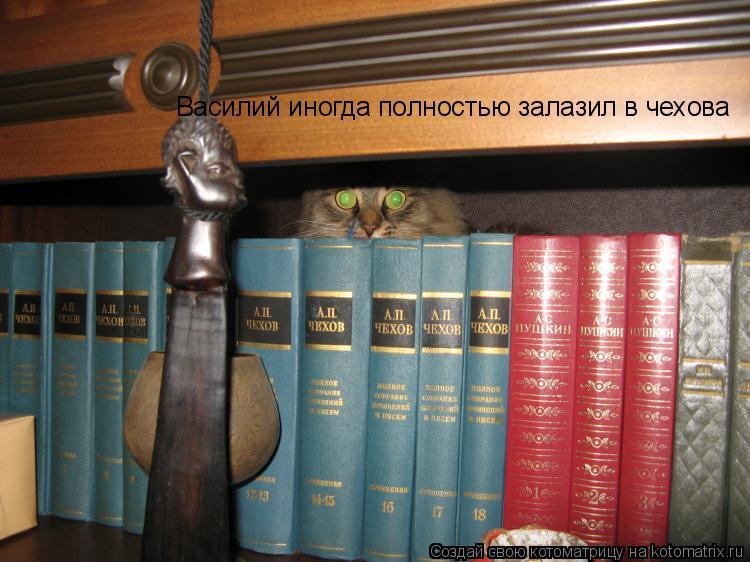 Котоматрица: Василий иногда полностью залазил в чехова