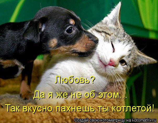 Котоматрица: Любовь?  Да я же не об этом... Так вкусно пахнешь ты котлетой!