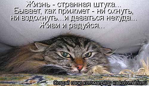 Котоматрица: Жизнь - странная штука... Бывает, как прижмет - ни охнуть,  ни вздохнуть...и деваться некуда... Живи и радуйся...