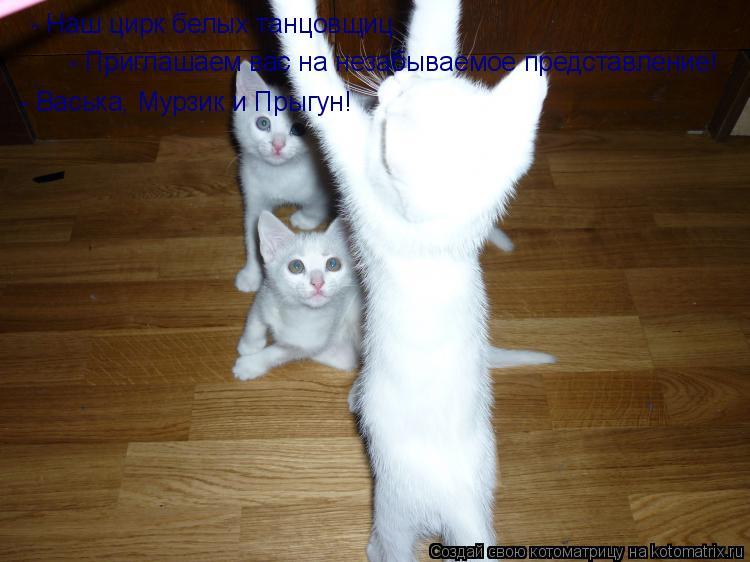 Котоматрица: - Наш цирк белых танцовщиц. - Приглашаем вас на незабываемое представление! - Васька, Мурзик и Прыгун!