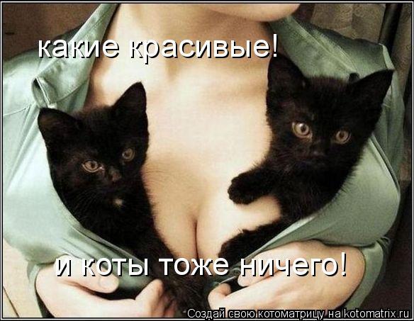 Котоматрица: какие красивые! и коты тоже ничего!