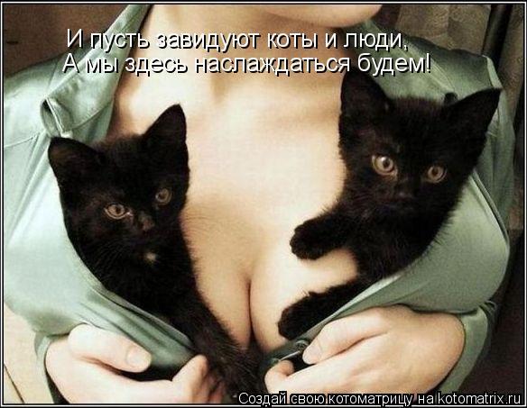 Котоматрица: И пусть завидуют коты и люди, А мы здесь наслаждаться будем!