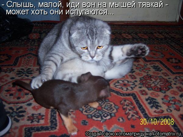 Котоматрица: - Cлышь, малой, иди вон на мышей тявкай -  может хоть они испугаются...