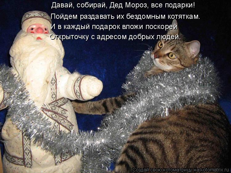 Котоматрица: Давай, собирай, Дед Мороз, все подарки! Пойдем раздавать их бездомным котяткам. И в каждый подарок вложи поскорей Открыточку с адресом добры
