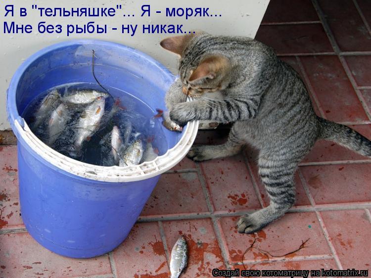 """Котоматрица: Я в """"тельняшке""""... Я - моряк... Мне без рыбы - ну никак..."""