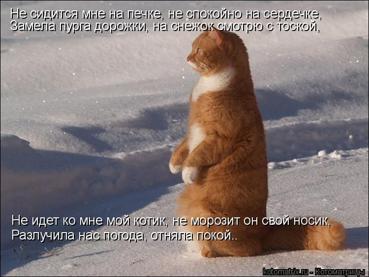 Котоматрица: Не сидится мне на печке, не спокойно на сердечке, Замела пурга дорожки, на снежок смотрю с тоской, Не идет ко мне мой котик, не морозит он свой