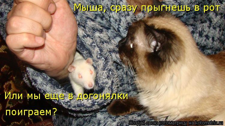 Котоматрица: Мыша, сразу прыгнешь в рот Или мы еще в догонялки  поиграем?