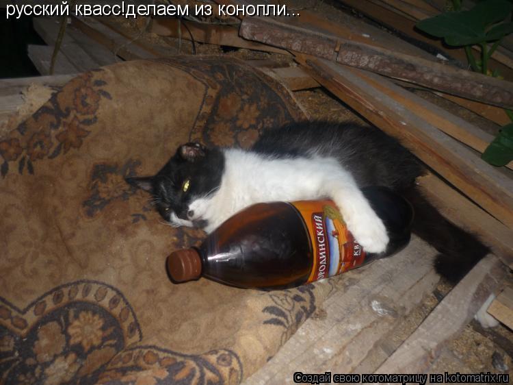 Котоматрица: русский квасс!делаем из конопли...