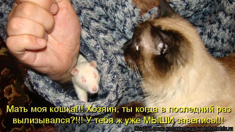 Мать моя кошка!!! Хозяин, ты когда в последний раз вылизывался?!!! У т
