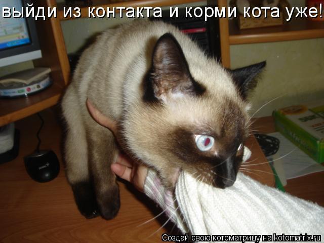 Котоматрица: выйди из контакта и корми кота уже!!!!