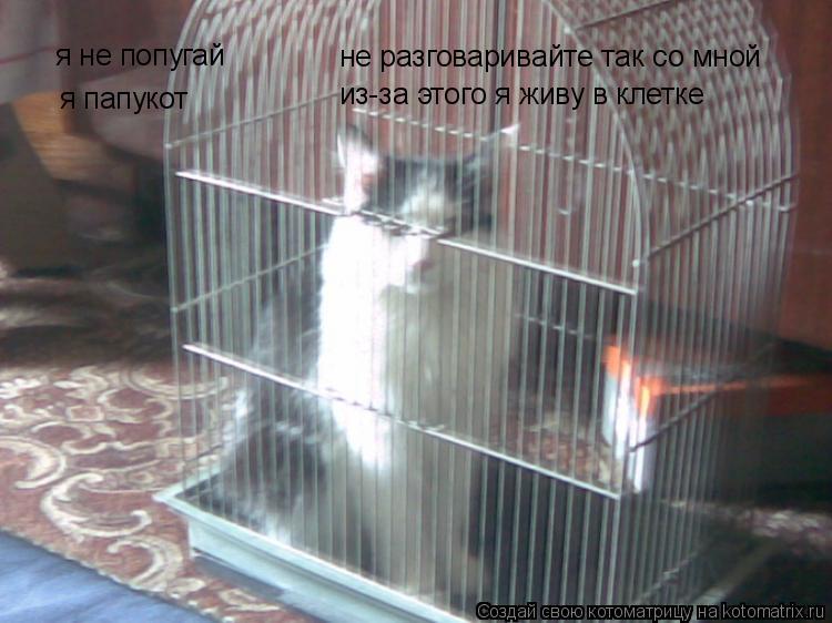 Котоматрица: я не попугай я папукот не разговаривайте так со мной из-за этого я живу в клетке