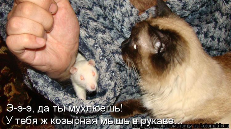 Котоматрица: Э-э-э, да ты мухлюешь! У тебя ж козырная мышь в рукаве...