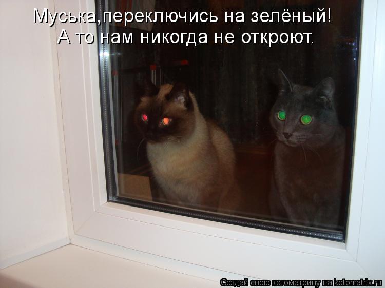 Котоматрица: Муська,переключись на зелёный! А то нам никогда не откроют.
