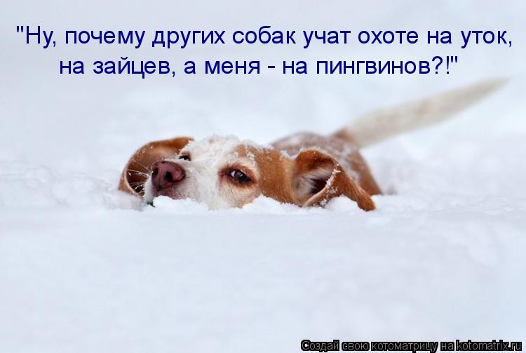 """Котоматрица: """"Ну, почему других собак учат охоте на уток, на зайцев, а меня - на пингвинов?!"""""""