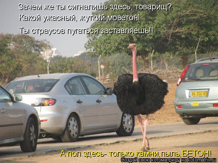 Котоматрица: Зачем же ты сигналишь здесь, товарищ? Какой ужасный, жуткий моветон! Ты страусов пугаться заставляешь!! А пол здесь- только камни,пыль,БЕТОН!