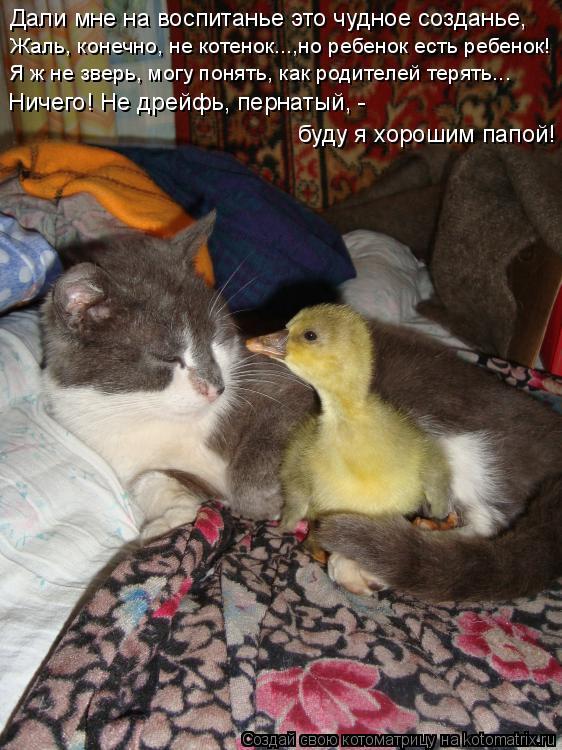 Котоматрица: Дали мне на воспитанье это чудное созданье, Жаль, конечно, не котенок...,но ребенок есть ребенок! Я ж не зверь, могу понять, как родителей теря
