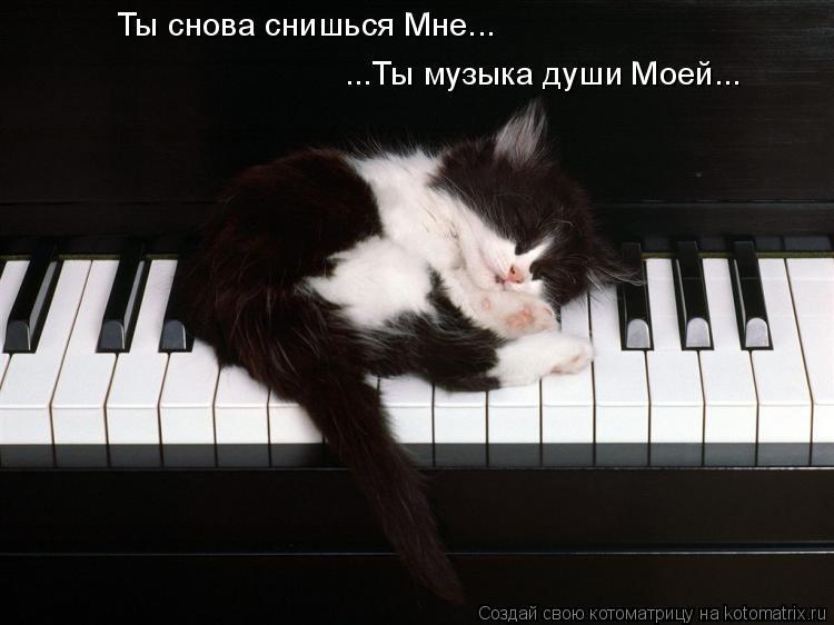 Котоматрица: ...Ты музыка души Моей... Ты снова снишься Мне...