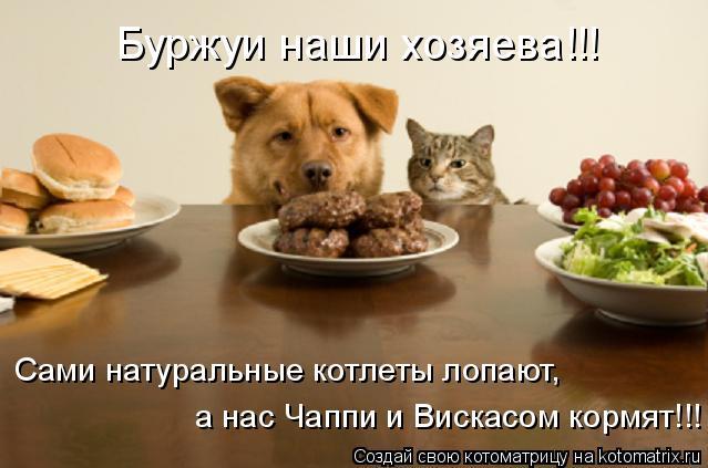 Котоматрица: Буржуи наши хозяева!!! Сами натуральные котлеты лопают, а нас Чаппи и Вискасом кормят!!!