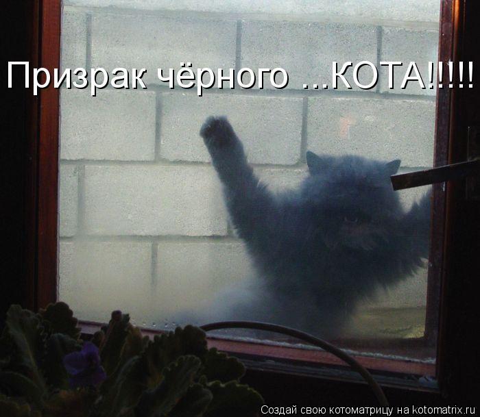 Котоматрица: Призрак чёрного ...КОТА!!!!!