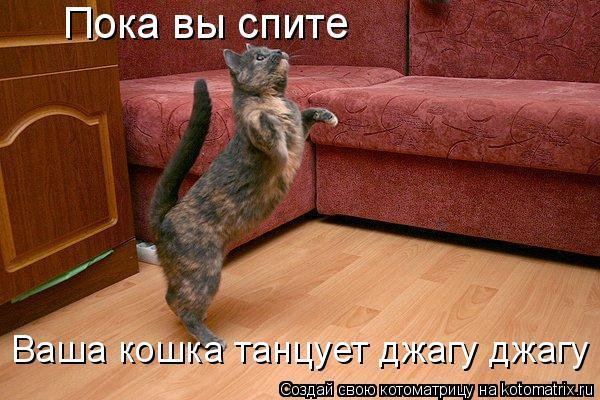 Котоматрица: Пока вы спите Ваша кошка танцует джагу джагу