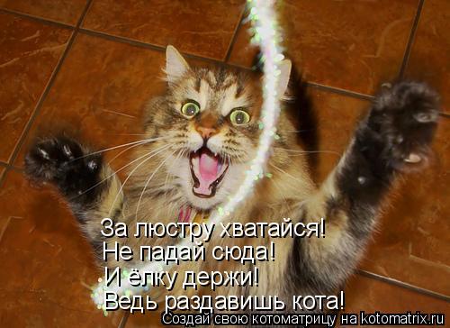 Котоматрица: За люстру хватайся! Не падай сюда! И ёлку держи! Ведь раздавишь кота!