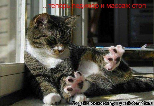 Котоматрица: ...теперь педикюр и массаж стоп