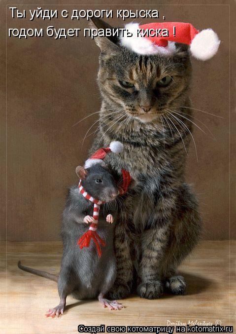 Котоматрица: Ты уйди с дороги крыска ,  годом будет править киска !