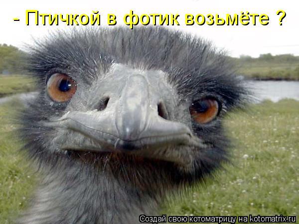 Котоматрица: - Птичкой в фотик возьмете ? ..