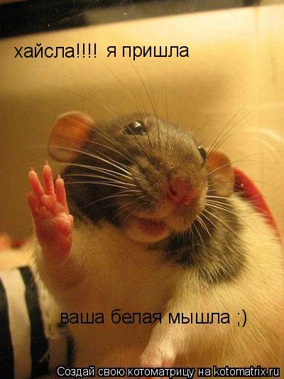Котоматрица: хайсла!!!! я пришла ваша белая мышла ;)