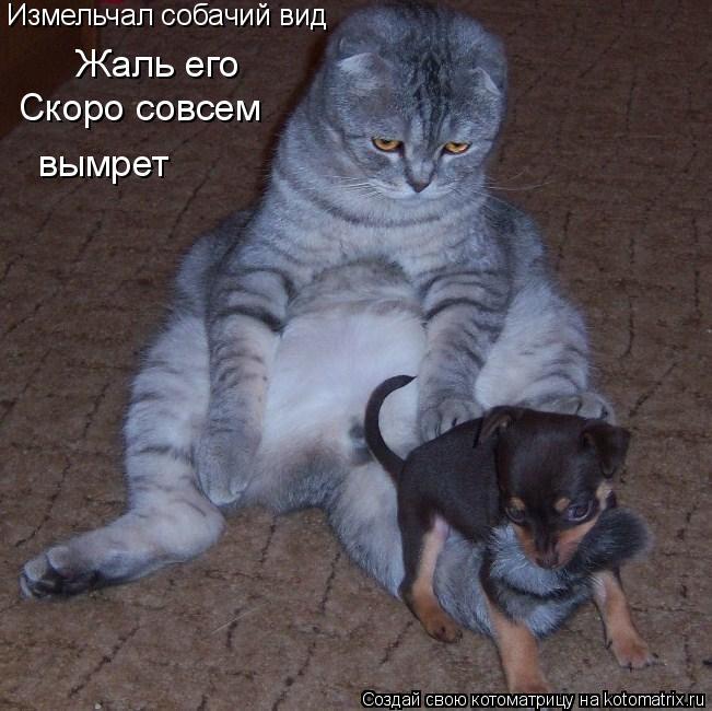 Котоматрица: Жаль его Скоро совсем  вымрет Измельчал собачий вид