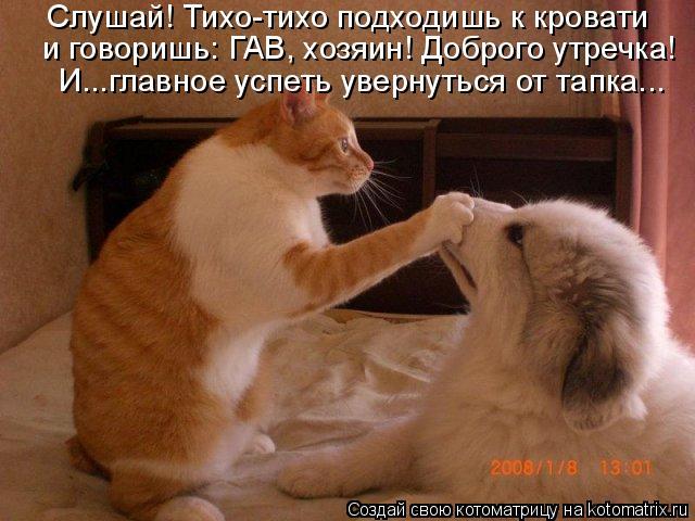Котоматрица: Слушай! Тихо-тихо подходишь к кровати  и говоришь: ГАВ, хозяин! Доброго утречка!  И...главное успеть увернуться от тапка...