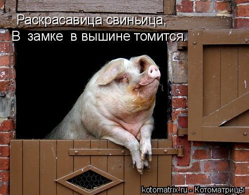 Котоматрица: Раскрасавица свиньица, В  замке  в вышине томится.