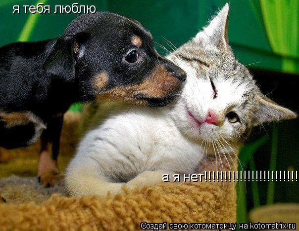Котоматрица: я тебя люблю я тебя люблю а я нет!!!!!!!!!!!!!!!!!!!!!!!!!!!!!!