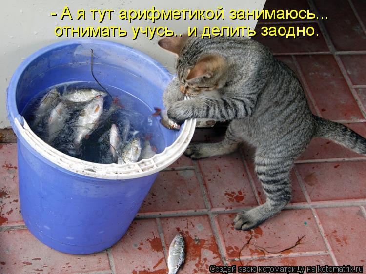 Котоматрица: - А я тут арифметикой занимаюсь... отнимать учусь.. и делить заодно.