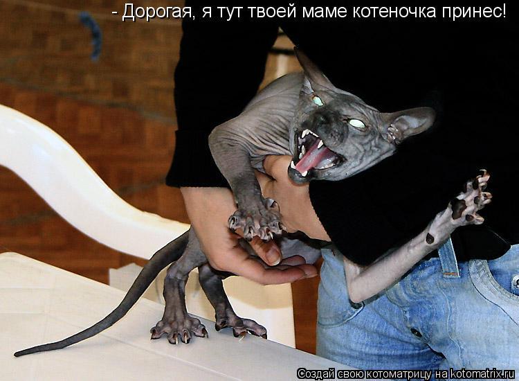 Котоматрица: - Дорогая, я тут твоей маме котеночка принес!
