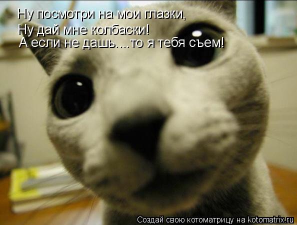 Котоматрица: Ну посмотри на мои глазки, Ну посмотри на мои глазки, Ну дай мне колбаски! А если не дашь....то я тебя съем!