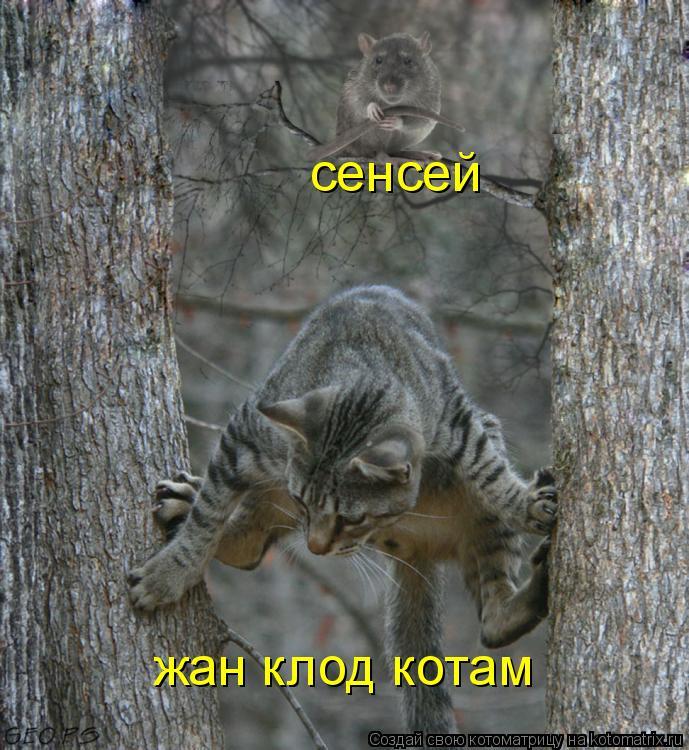 Котоматрица: сенсей жан клод котам