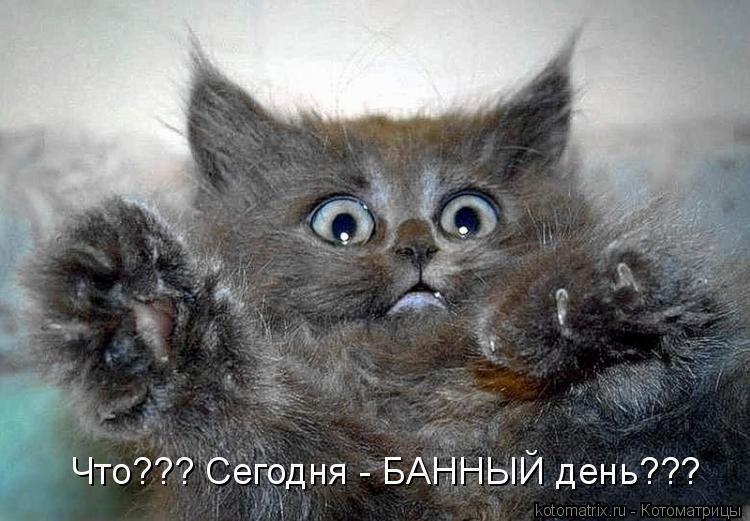 Котоматрица: Что??? Сегодня - БАННЫЙ день???
