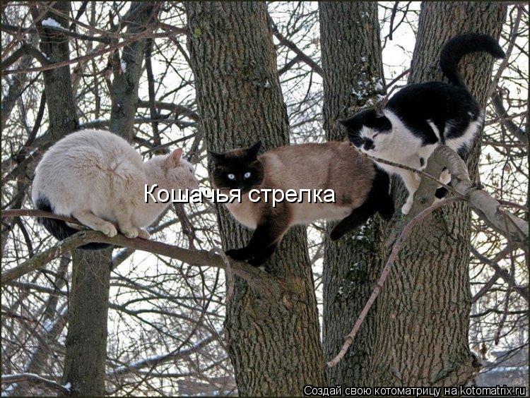 Котоматрица: Кошачья стрелка