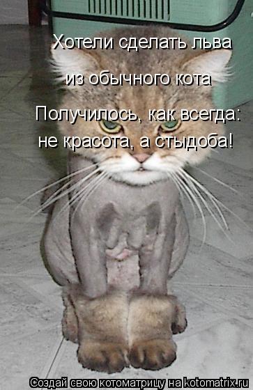Котоматрица: Хотели сделать льва  из обычного кота  Получилось, как всегда: не красота, а стыдоба!