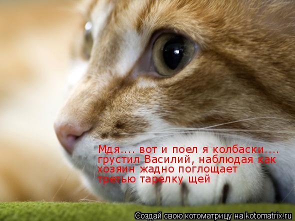 Котоматрица: Мдя.... вот и поел я колбаски....  грустил Василий, наблюдая как   хозяин жадно поглощает  третью тарелку щей