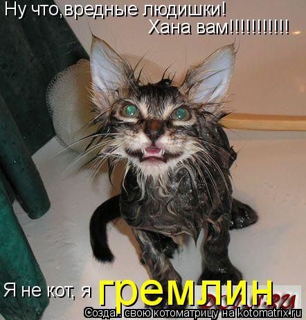 Котоматрица: Ну что,вредные людишки! Хана вам!!!!!!!!!!! Я не кот, я гремлин