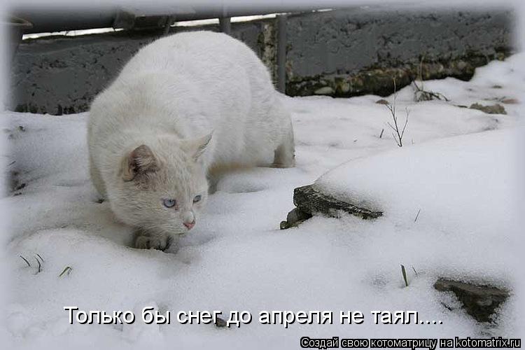 Котоматрица: Только бы снег до апреля не таял....