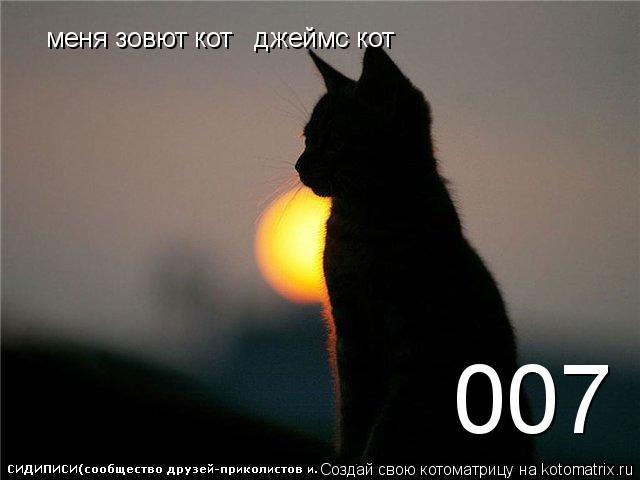 Котоматрица: 007 меня зовют кот   джеймс кот