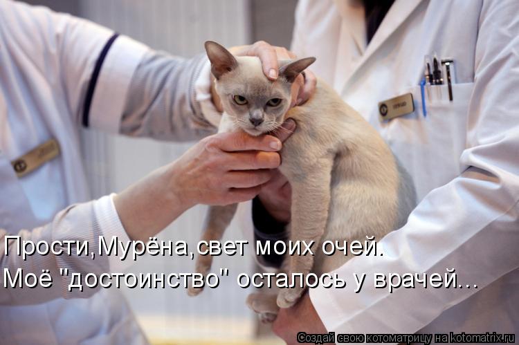 """Котоматрица: Прости,Мурёна,свет моих очей. Моё """"достоинство"""" осталось у врачей..."""