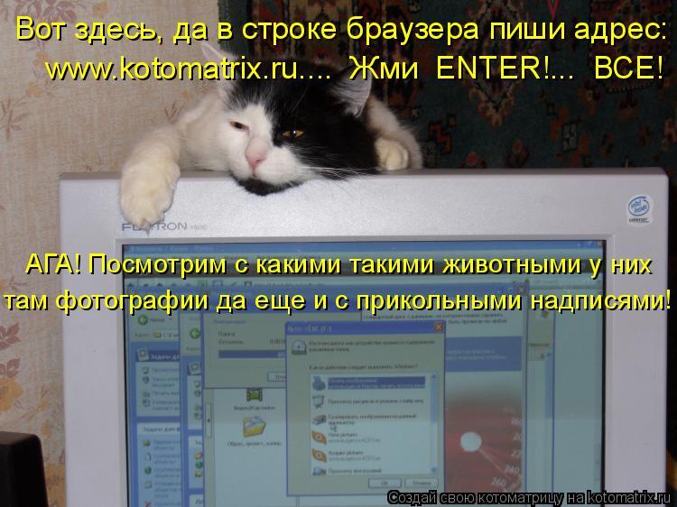 Котоматрица: Вот здесь, да в строке браузера пиши адрес: www.kotomatrix.ru....  Жми  ENTER!...  ВСЕ! АГА! Посмотрим с какими такими животными у них  там фотографии