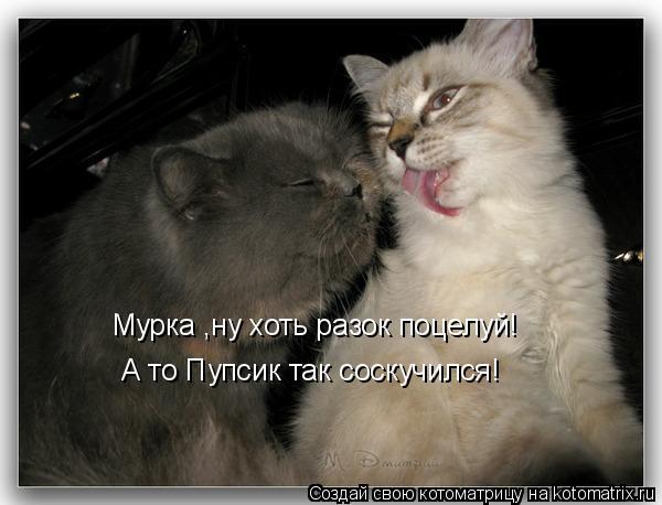 Котоматрица: Мурка ,ну хоть разок поцелуй! А то Пупсик так соскучился!