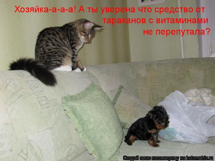 Котоматрица: Хозяйка-а-а-а! А ты уверена что средство от  тараканов с витаминами  не перепутала?
